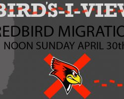 Bird's-I-View: Redbird Migration